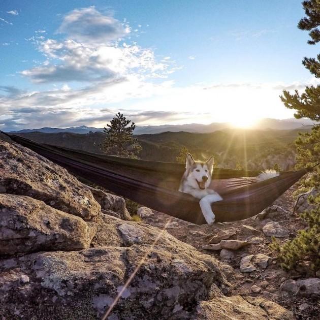 Loki-the-Wolfdog10__880