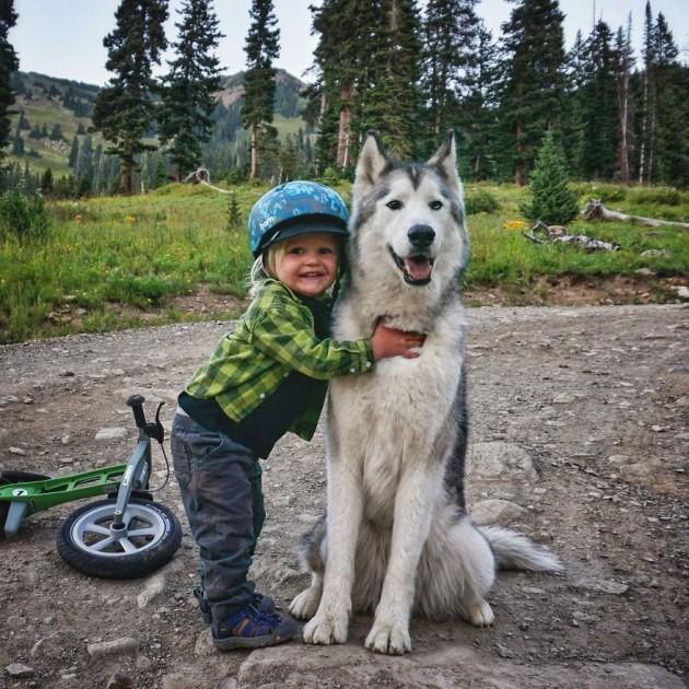 Loki-the-Wolfdog27__880