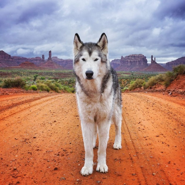 Loki-the-Wolfdog4__880