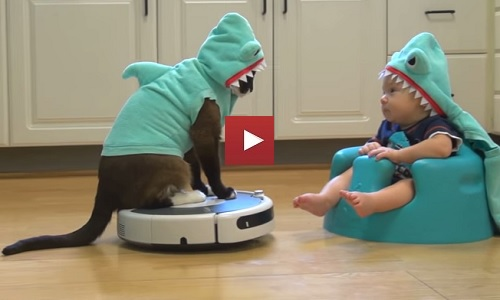cool-shark-cat-on-roomba-entertains-adorable-shark-baby-i-cant-tell-who-is-cuter