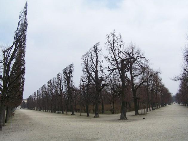 Recorte perfeito das árvores no Parque Schonbrunn, Áustria.