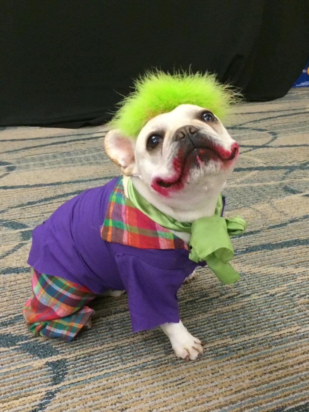 Funniest Best Dog Costumes