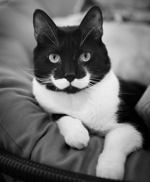 #6 - O gato com o bigode mais estiloso de todos