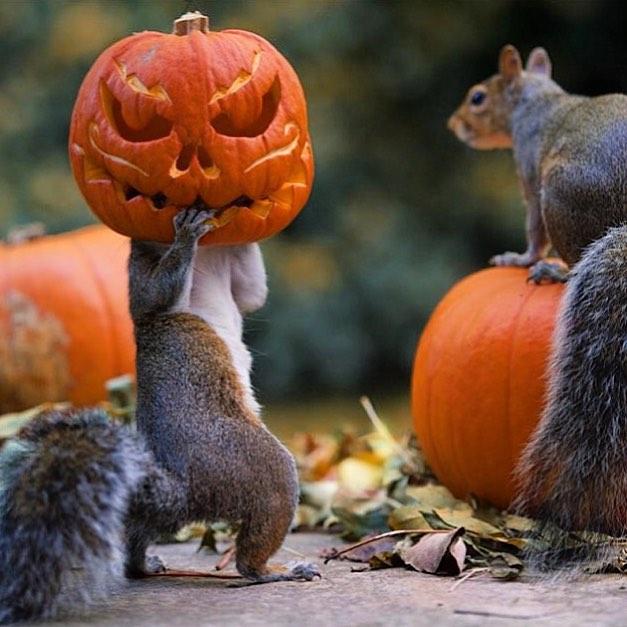 #11 -  Halloween está chegando.