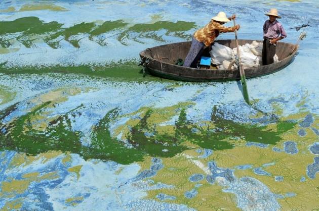 Barco cheio de algas no Lago Chaohu, na China.