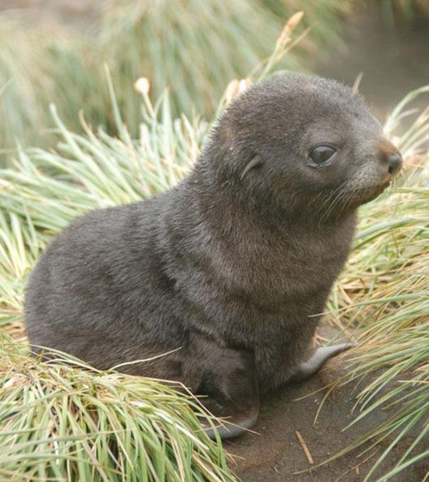 cutest-baby-animals-105__605