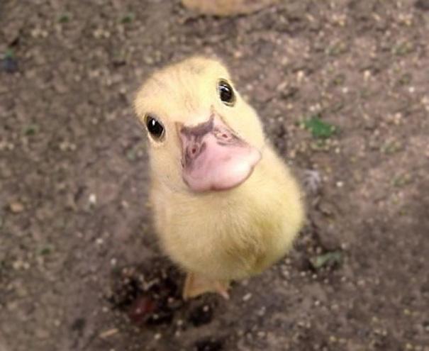 cutest-baby-animals-14__605