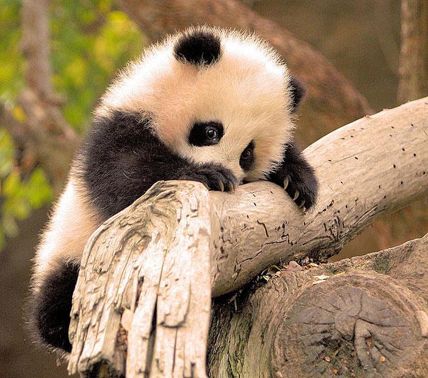 cutest-baby-animals-2__605