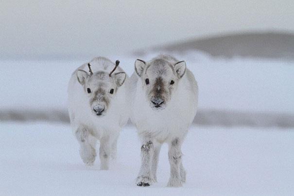 cutest-baby-animals-47__605