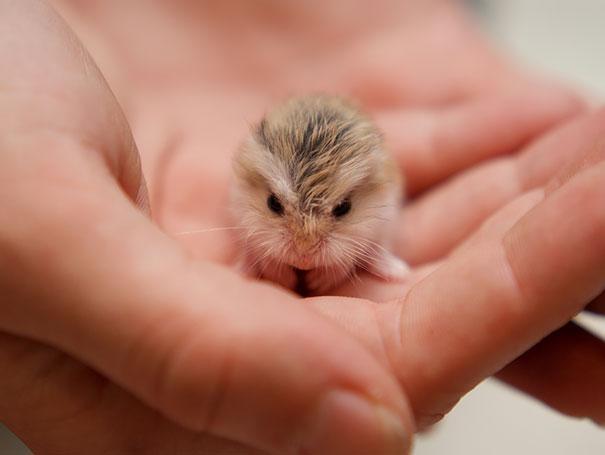 cutest-baby-animals-50__605