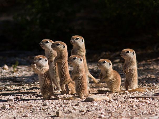 cutest-baby-animals-53__605