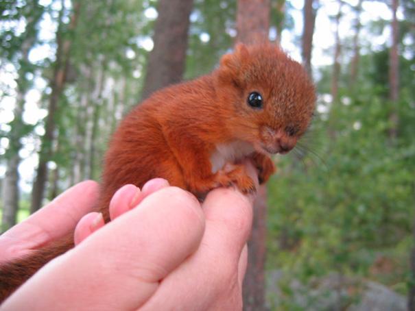 cutest-baby-animals-59__605(1)