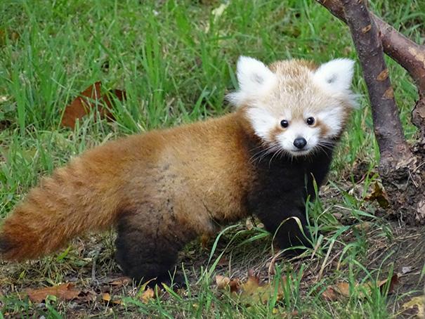 cutest-baby-animals-70__605