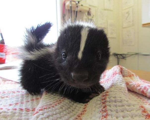 cutest-baby-animals-731__605
