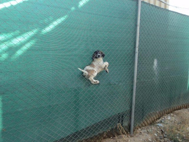 dogs-who-made-poor-life-choices-12__605