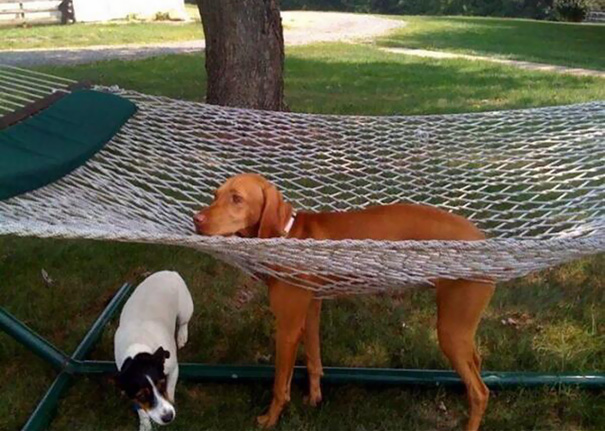 dogs-who-made-poor-life-choices-29__605