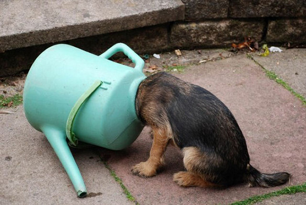 dogs-who-made-poor-life-choices-32__605