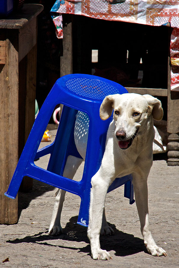 dogs-who-made-poor-life-choices-47__605