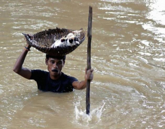 Homem salva filhotes de gato durante uma enchente que assolou a Índia em 2011.