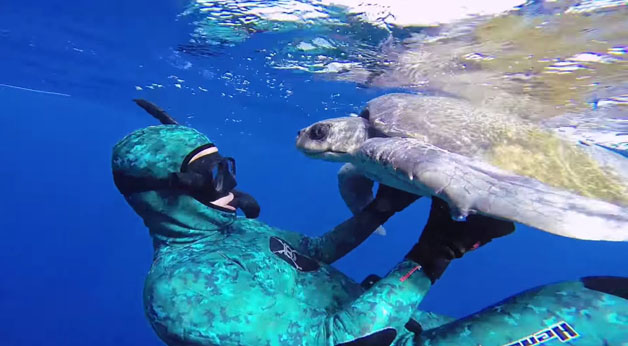 tartaruga-mergulhador2