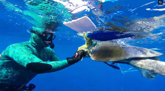 tartaruga-mergulhador6