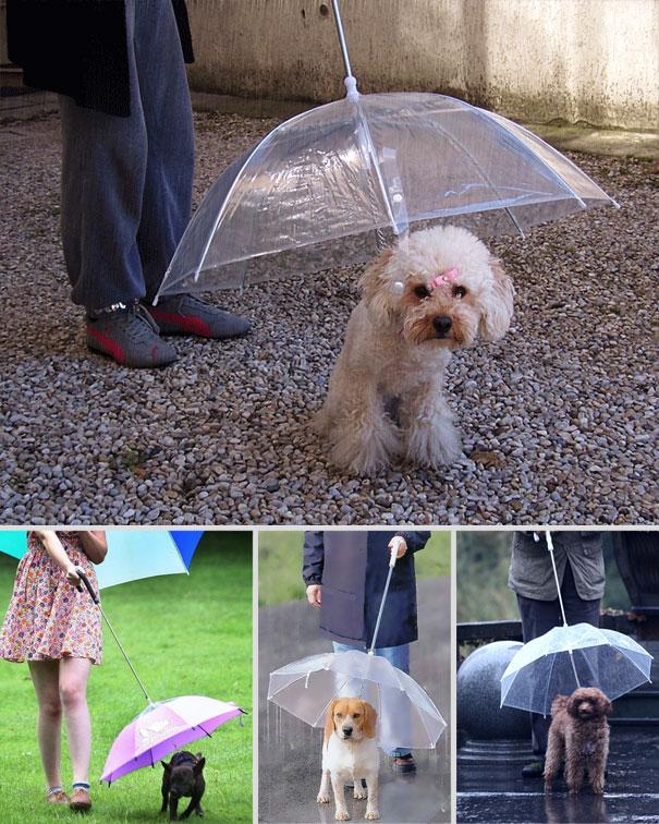 #4 - Guarda-Chuva para cães.