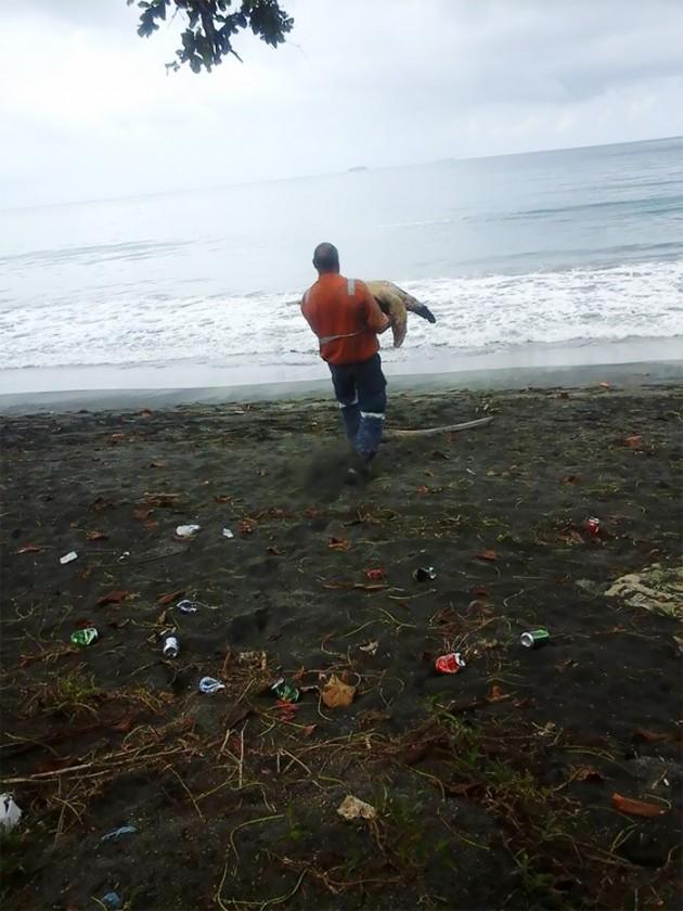 man-saves-sea-turtles-arron-culling-papua-new-guinea-6