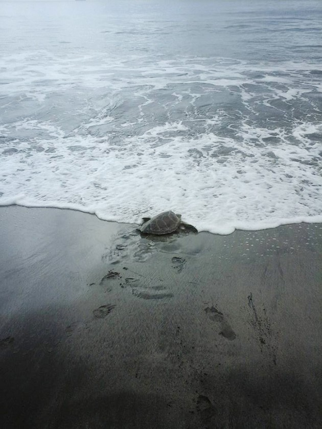 man-saves-sea-turtles-arron-culling-papua-new-guinea-8-1