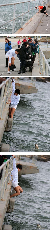 Sue Drummond estava andando com seu amado Shih Tzu, Bibi, num píer em Melbourne, quando uma forte ventania o levou e o derrubou nas águas agitadas da baía. Um transeuntee, Raden Soemawinata, que por acaso estava no pier aquele dia para espalhar as cinzas da avó, não perdeu tempo: tirou a roupa e mergulhou na baía para resgatar o animal.