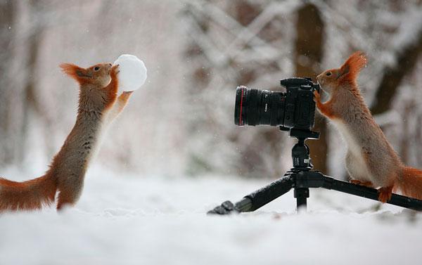 #16 - Vida de fotógrafo animal.
