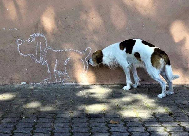 Perros-Momento-Oportuno-10