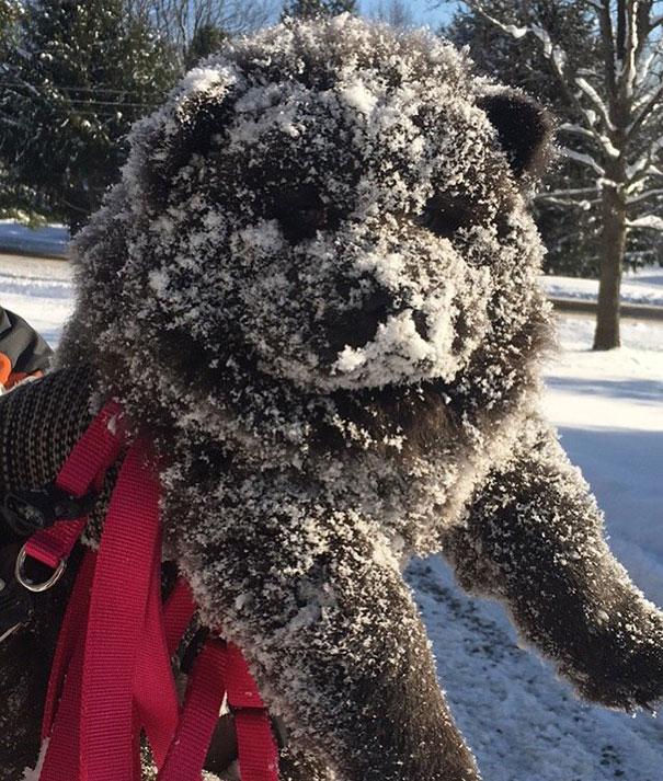 bear-dogs-31__605