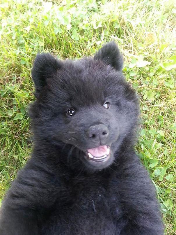 bear-dogs-32__605