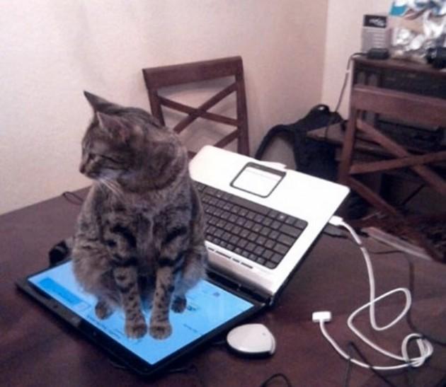 306505-R3L8T8D-650-epic-galerie-20-images-qui-vous-prouvent-que-les-chats-possedent-leur-propre-logique-6