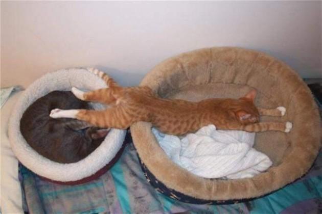306755-R3L8T8D-650-las-mejores-fotos-de-gatos-durmiendo-19
