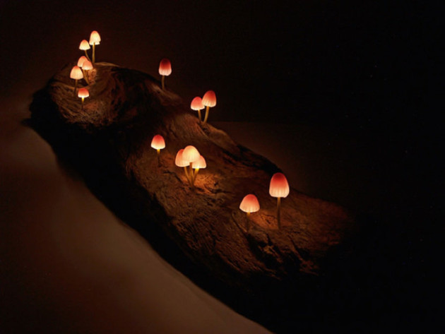 yukio-takano-led-magic-mushrooms (2)