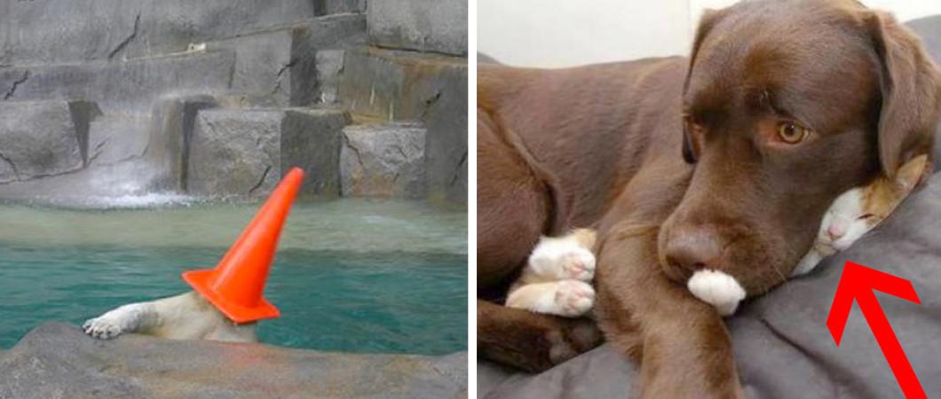 animais-