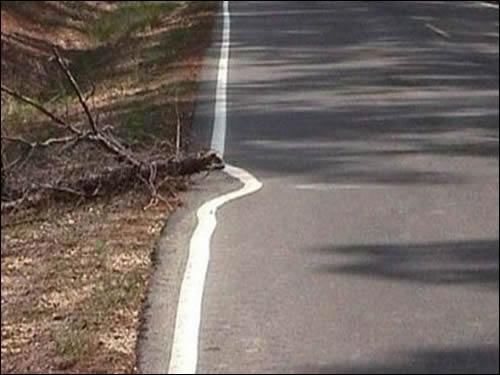 planta_estrada