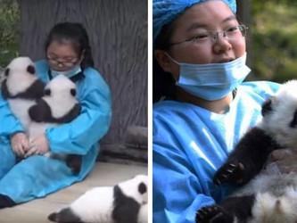 trabalho de abracar pandas