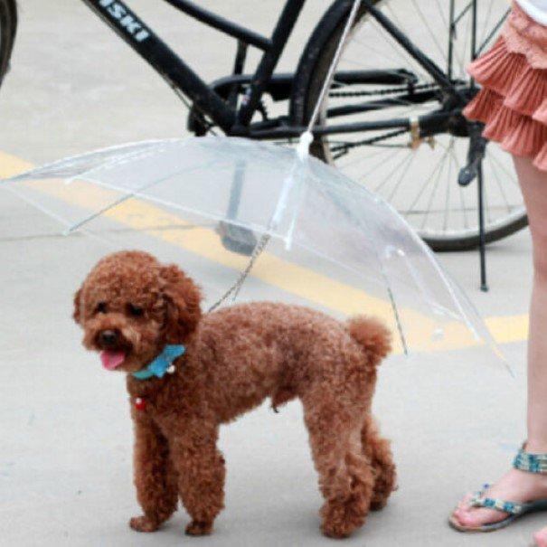 Guarda-chuva canino