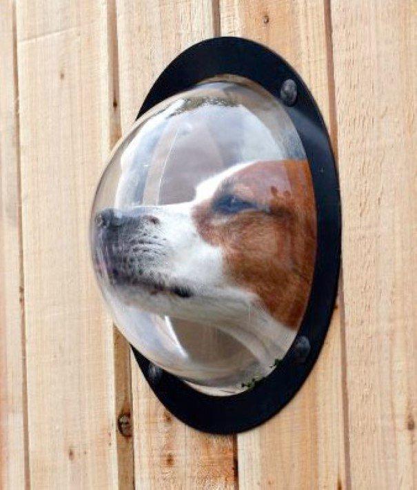 Janelinha personalizada para Cães