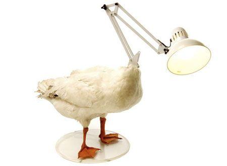 dead-duck-lamp