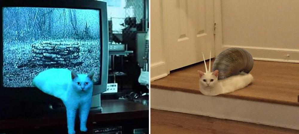 Gato-Metade