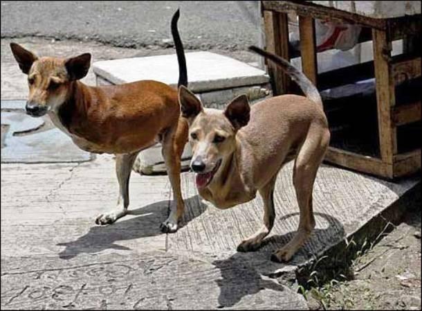 """Cães que nasceram sem as patas dianteiras. a internet deu o apelido carinhoso """"Cãogurus"""" a eles."""