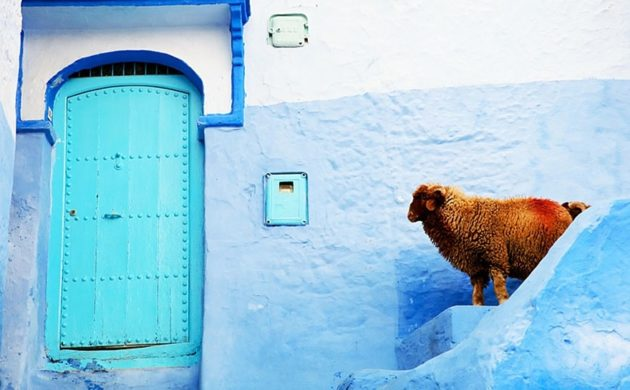 219255-880-1460542988-blue-streets-of-chefchaouen-morocco-8
