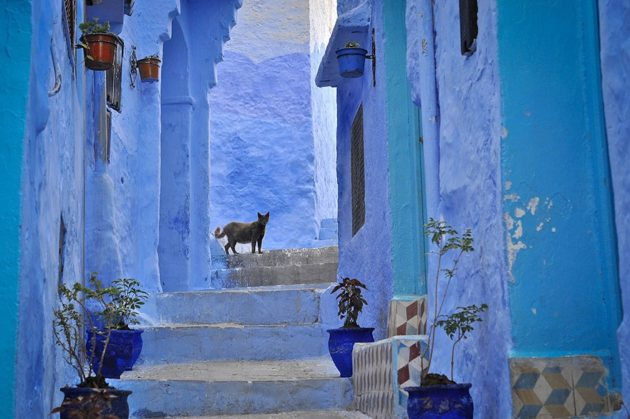 219455-880-1460542988-blue-streets-of-chefchaouen-morocco-3