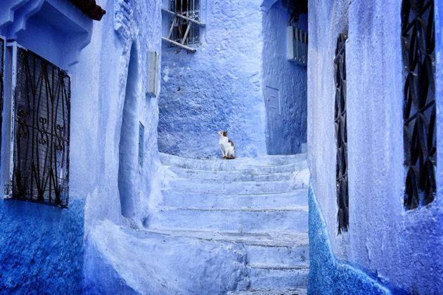 219505-880-1460542988-blue-streets-of-chefchaouen-morocco-4