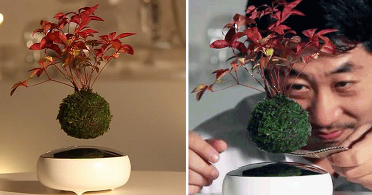 Bonsai Flutuante J