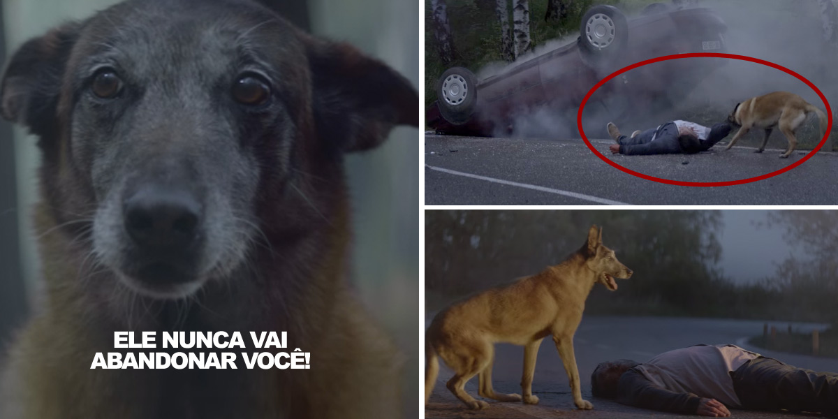 Vídeo chocante mostra o amor de um cão pelo dono mesmo depois de ser abandonado. Se emocione junto!