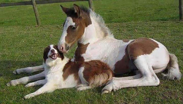 brother-from-another-mother-similar-animals-17-57879204672cd__605